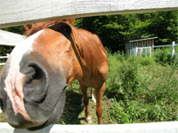 funny horse pic